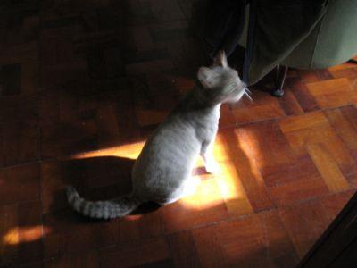 gatita descubre el sol