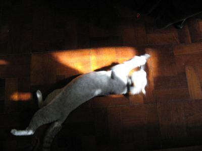 gatita descubre el sol3